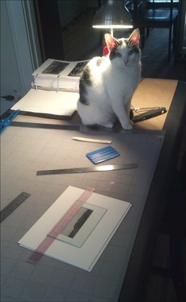 archives, workspace, funny cat photo